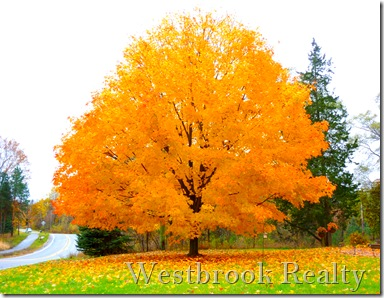 mapleinfallGrandriverDr thumb Ada Michigan Neighborhood Real Estate Report Catamount Sept 2011