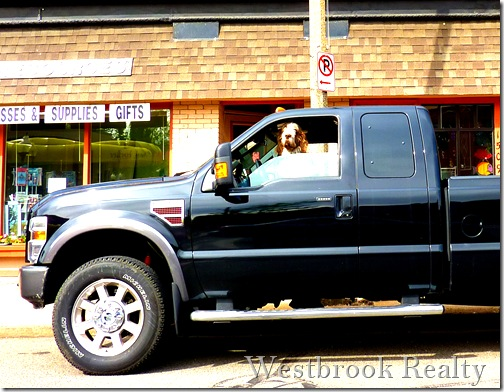 Foto Friday – Dog Waiting in Parked Truck - Grand Rapids ...